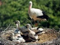 Storks's oasis